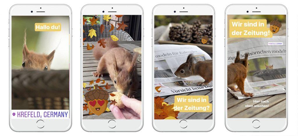 Instagram Stories über Eichhörnchen in Krefeld